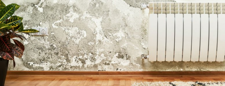4-tips-to-prevent-mold-growth
